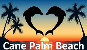Cane Palm Beach with dolphins over sunset